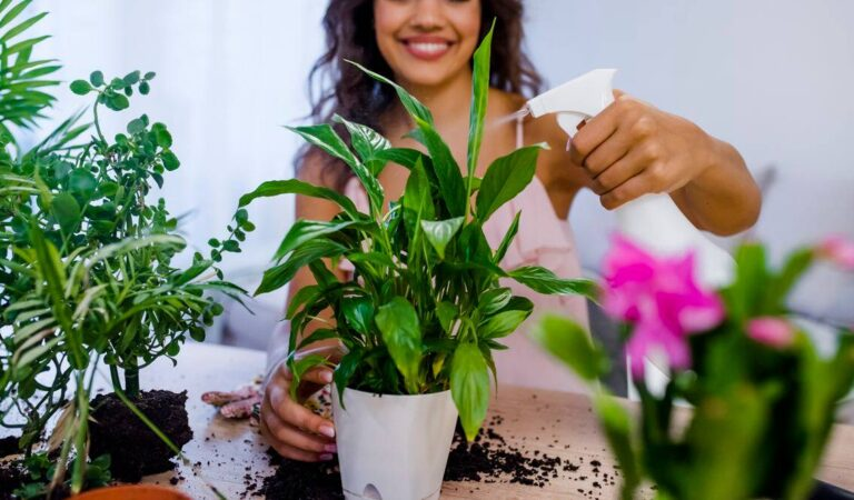 How To Protect Your Indoor Plants From Pests
