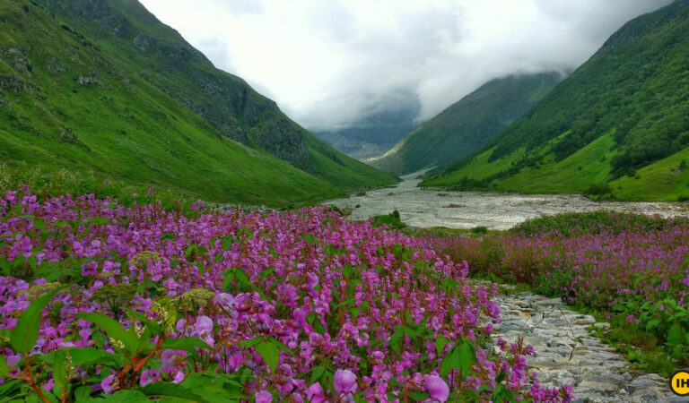 Valley of flowers Guide 2021